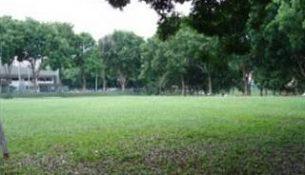 An empty yard.